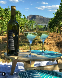 Picnic Table in vineyard 2